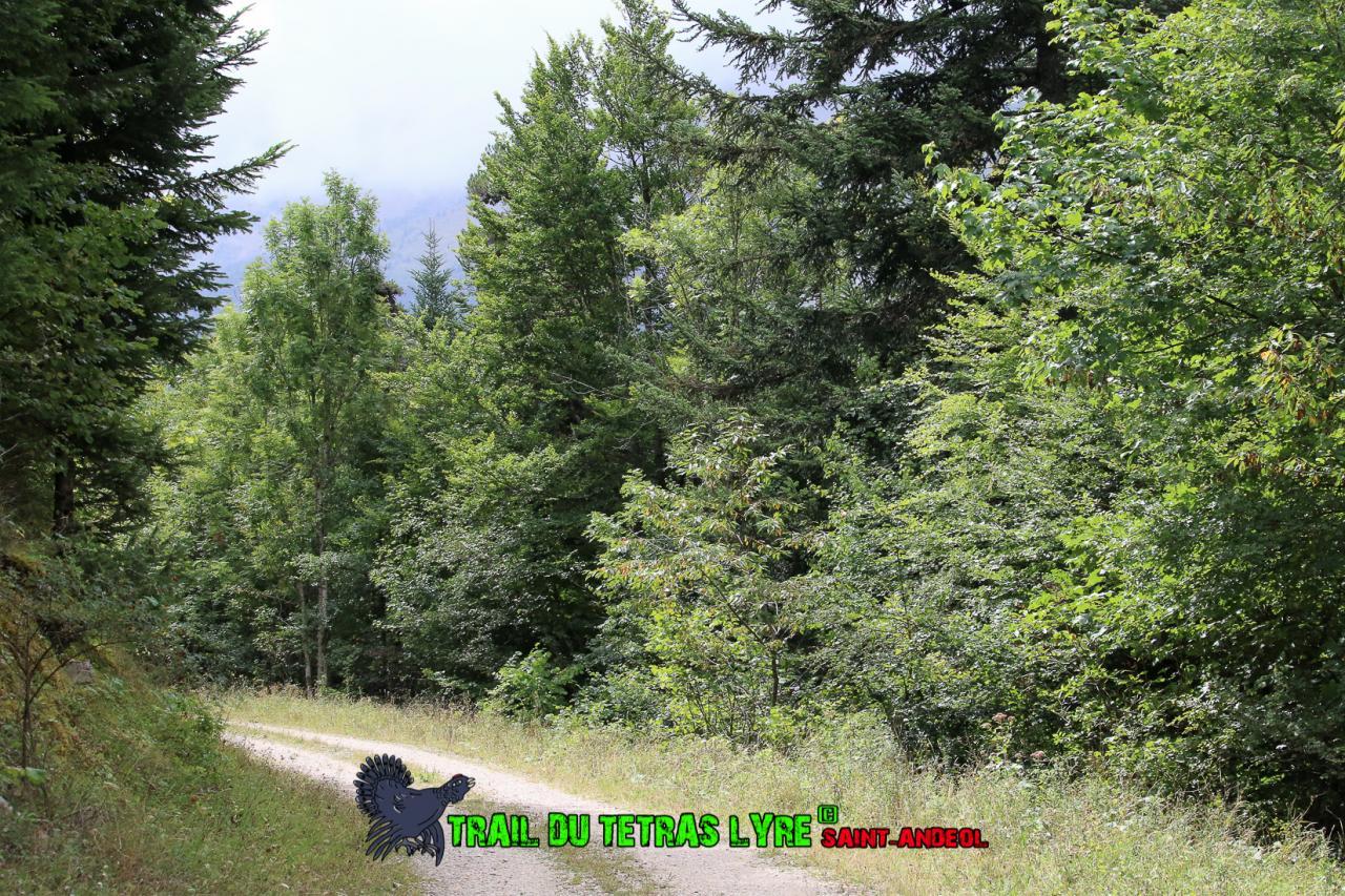 Trail Tétras 2017 (244)